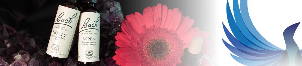 cursos_flores
